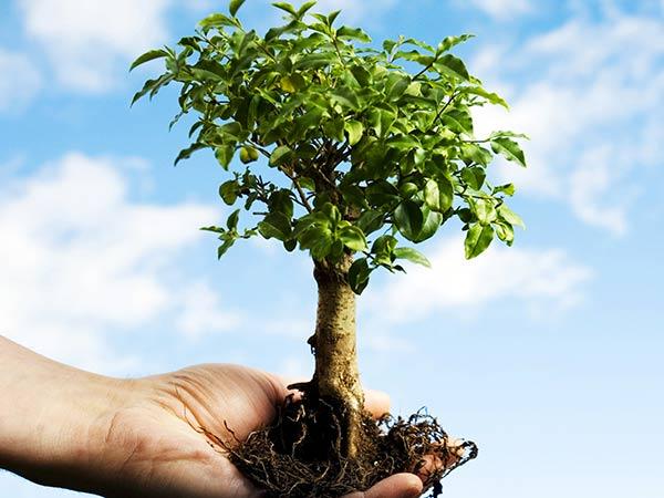 Piante e alberi carpi reggio emilia coltivare piantare for Alberi da frutto prezzi