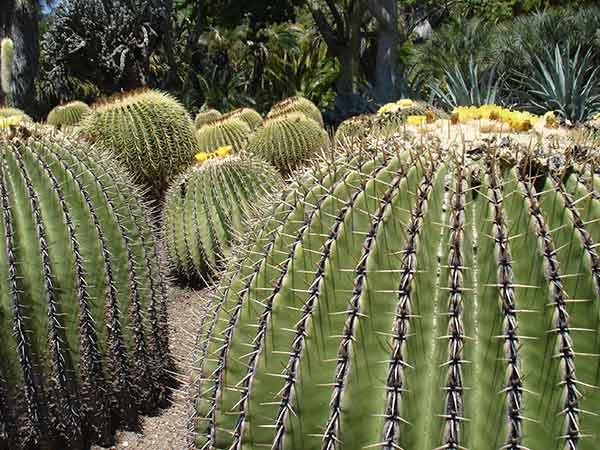 piante da giardino vendita on line idee per interni e mobili