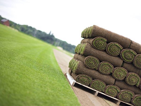 Prato a rotoli modena rubiera posa erba inglese costo for Prato pronto