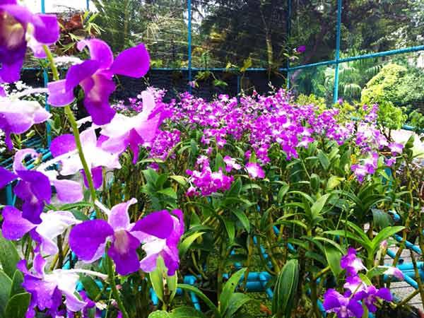 Fiori da giardino primaverili i fiori di primavera per for Fiori primaverili da giardino