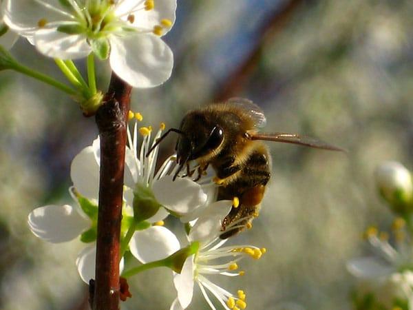 Alberi da frutto modena carpi piante da giardino vaso for Alberi da piantare in giardino
