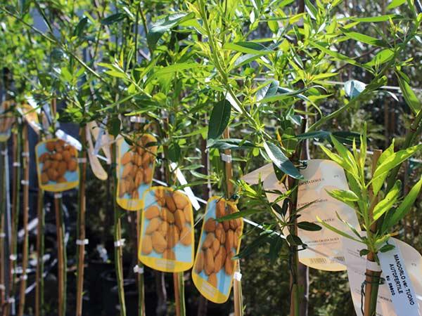 Alberi da frutto modena carpi piante da giardino vaso - Alberi frutto giardino ...