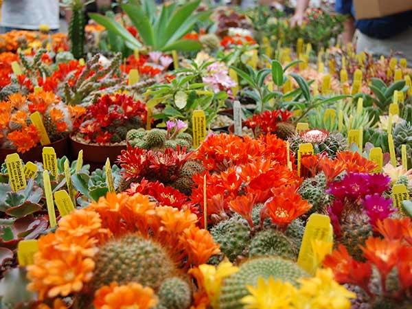 Piante grasse modena rubiera vivai vendita cactus da for Piante vendita