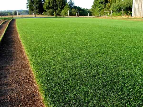 Prato a rotoli modena rubiera posa erba inglese costo for Campo sportivo seminterrato
